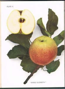 The Apples of England by H V England